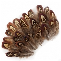 Loose Natural Almond Ringneck Plumage Feathers #2930