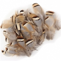 Loose Natural Partridge Plumage Feathers - #2933