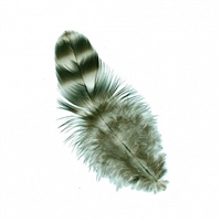Strung Rooster Chick Chinchilla Feathers - #2931