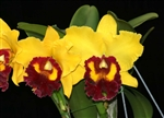 Blc. Williette Wong 'The Best'