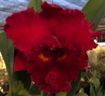 Blc. Achung Ruby 'Red Ribbon'
