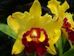 Blc. Yingluck Smile 'New Day'
