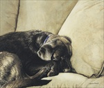Dog Nap Open Edition Print