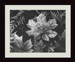 Foliage by Ansel Adams
