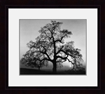 Oak Tree Sunrise by Ansel Adams