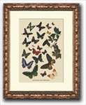 Antique Butterfly Print