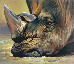Rhinoceros Sadness