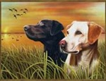 Yellow and Chocolate Labs