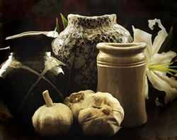 Autumn Still Life by Hal Halli
