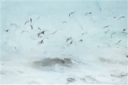 Birds Above a Stormy Sea by Hal Halli