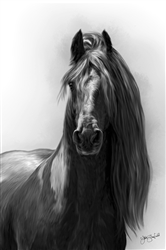 Friesian Graphite - Horse by Lois Stanfield
