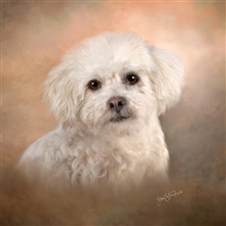 Bichon Frise - dog by Lois Stanfield