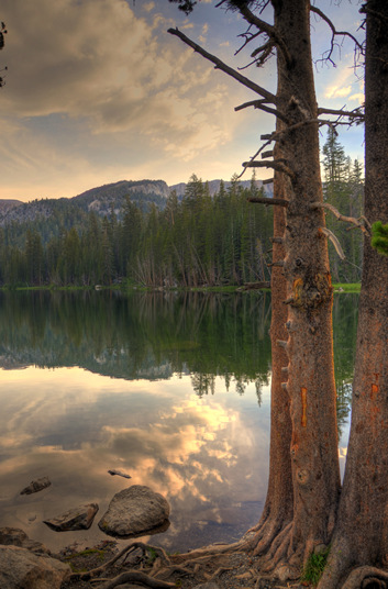 Mamie Lake Trees Mammoth California. A gallery wrapped canvas by Kelly Wade