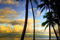 Palms Molokai Hawaii. A gallery wrapped canvas by Kelly Wade