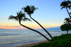 Sunrise Palms Hawaii. A gallery wrapped canvas by Kelly Wade