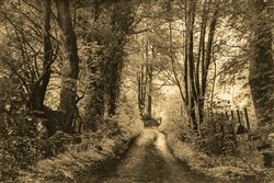 Down the Road by Hal Halli