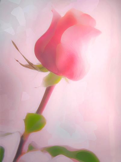 Soft Pink Rose by Hal Halli