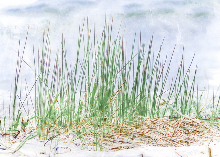Grass on the Beach by Hal Halli