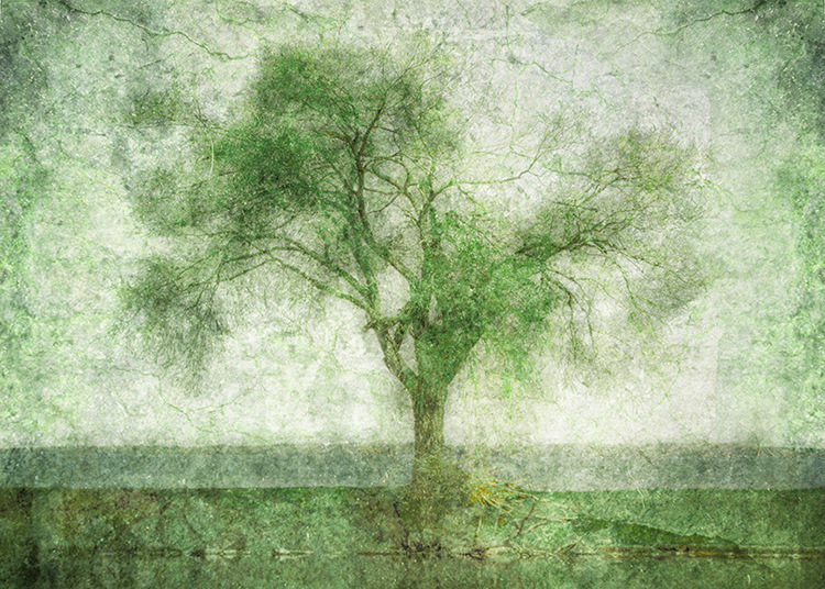 Tree at the Lake by Hal Halli