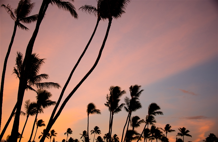 Napili Palm Sunrise. A gallery wrapped canvas by Kelly Wade