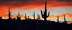 Saguaro Ridge - Western desert scene giclee canvas by Don Schimmel