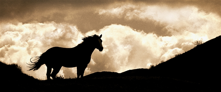 Cloud - Horse Running Ridge giclee canvas by Don Schimmel