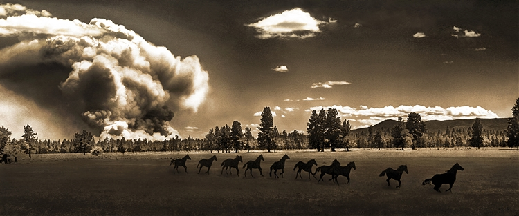 Wild Horses and Fire (Sepia) - Horses Running giclee canvas by Don Schimmel
