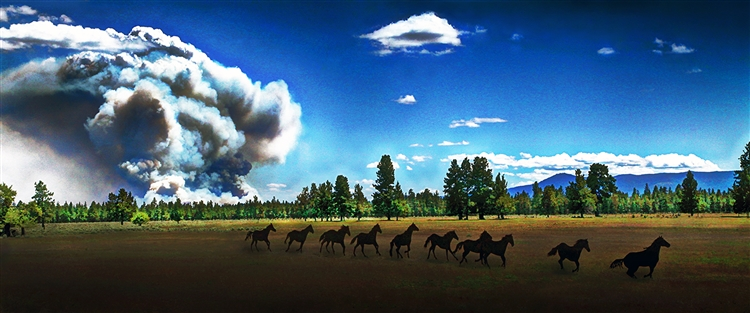Wild Horses and Fire - Horses Running giclee canvas by Don Schimmel