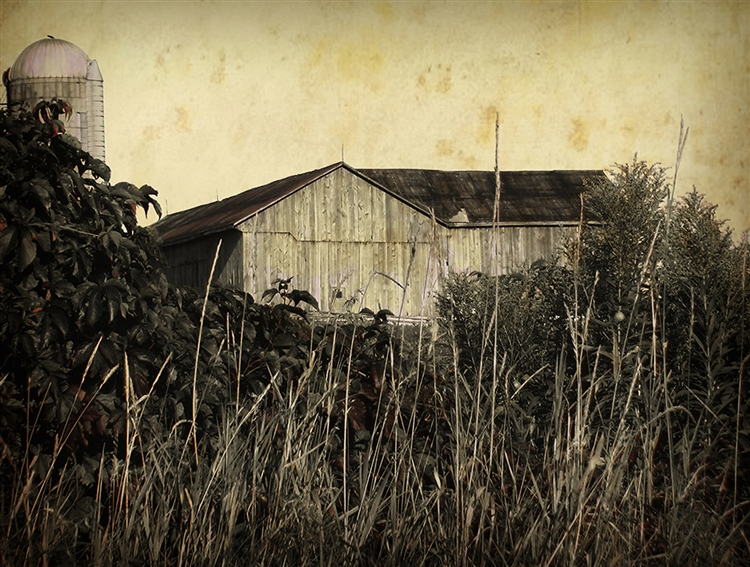 Barn Beyond the Grass Sepia Canvas by Hal Halli