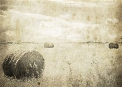 Hay Bales in the Field Sepia Canvas by Hal Halli