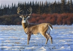 NORTH COUNTRY MONARCH BY DES McCAFFREY 19x27 Ltd. Edition Paper Giclee
