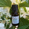 Daily Renewal Facial Serum
