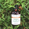 Hair Treatment Oil - Rosemary and Juniper Berry