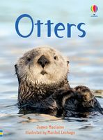 Otters (Beginners)
