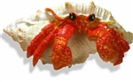 Blue Ribbon Exotic Environments Hermit Crab Pre-Pack asst colors