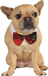 Rubies Plaid Pet Bowtie S-M