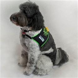Blind Dog Safety Vest, SHONVest Large