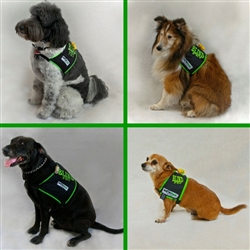 Blind Dog Safety Vest, SHONVest