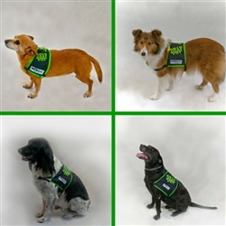 DEAF Dog Safety Vest, SHONVest