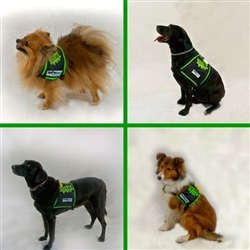 Diabetic Dog Safety Vest, SHONVest
