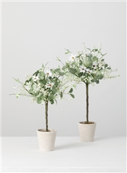 Daisy Eucalyptus Topiary - Small