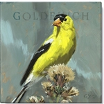 "Darren Gygi Yellow Goldfinch (5"" x 5"")"