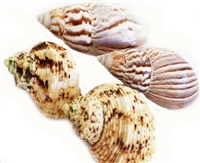 4 Hermit Crab Shell Set