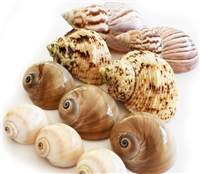 Hermit Crab Shell Set 10 Mix
