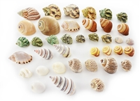Hermit Crab Shell Set 35