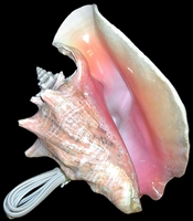 Pink Conch Lamp