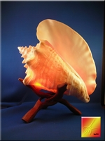 Pink Conch Lamp w. Stand