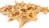 Chocolate Chip Starfish 1-2""