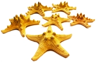 "Natural Knobby Starfish 4-5"" 6-Pack"