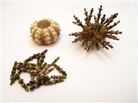 whole sea urchin set